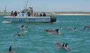 cropped-wiomsa_delegates_on_research_vessel_bottlensoe_dolphins_740x49211_740x492.jpg