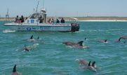cropped-wiomsa_delegates_on_research_vessel_bottlensoe_dolphins_740x49211_740x492.jpg
