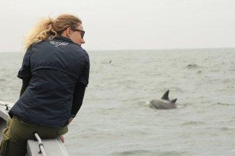 ewa_dolphins