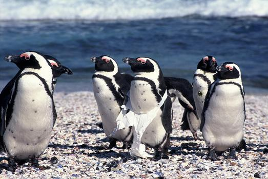Penguin Conservation